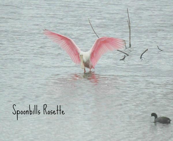 bird 8 named