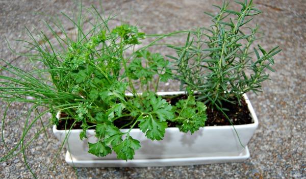 windowsill herbs notjustpaperandpaint.com