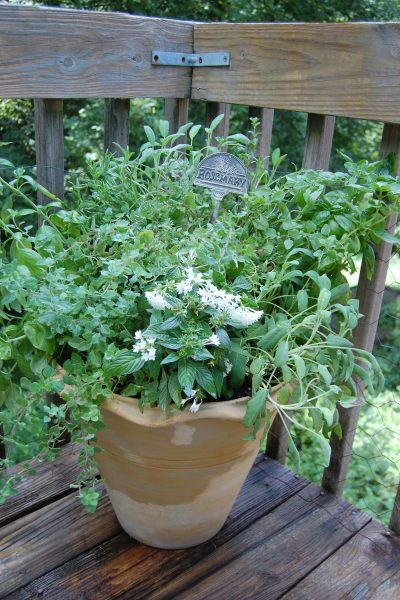 Planting a Herb Garden Container
