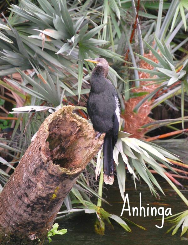 bird 17 named