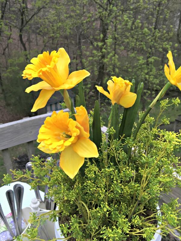 daffodils notjustpaperandpaint.com