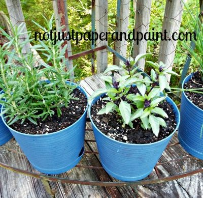 Planting Herbs with Bonnie Plants