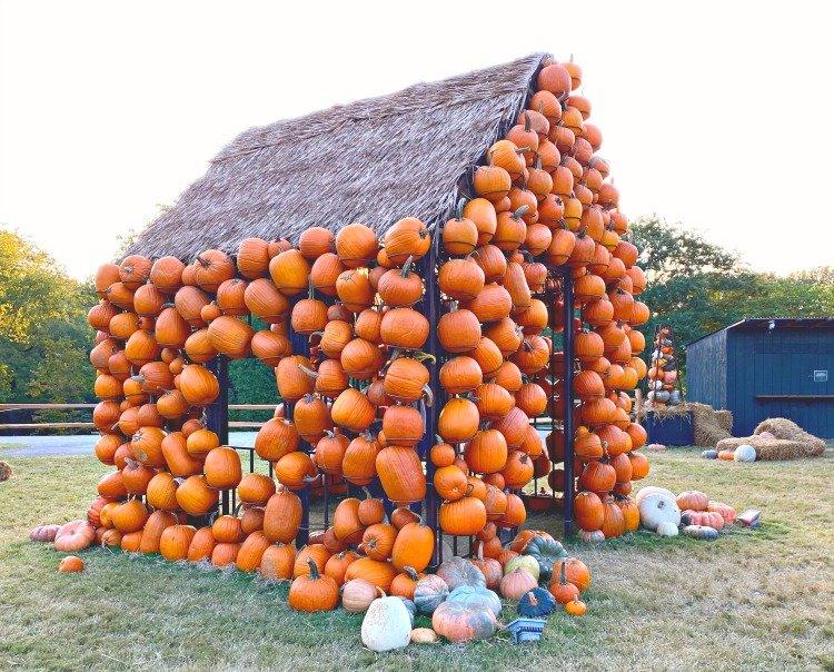 cheekwood gardens fall harvest nights pumpkin house