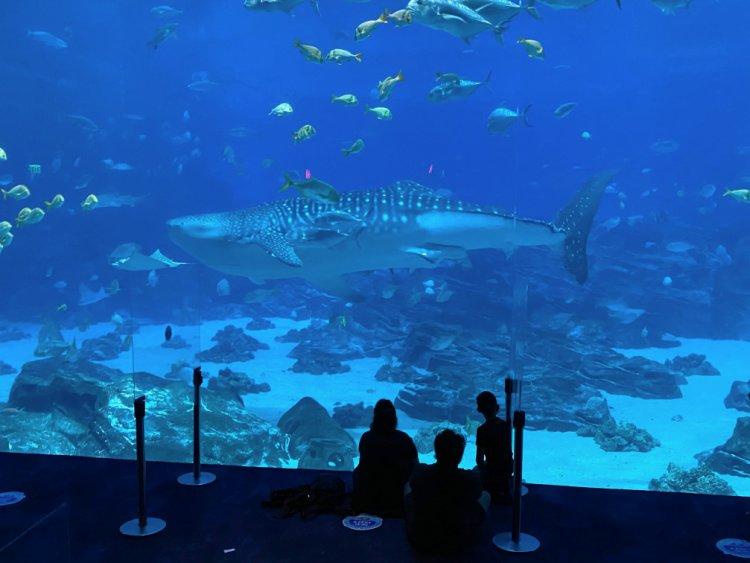 georgia-aquarium-atlanta-my-home-and-travels