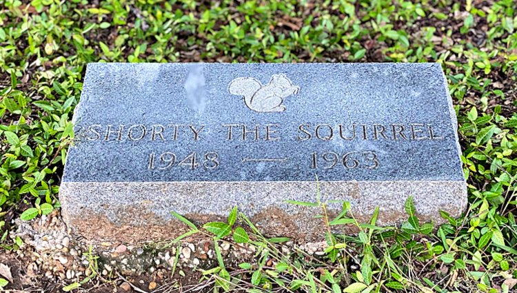 https://myhomeandtravels.com/tyler-rose-garden-and-museum/ shorty the squirrel grave